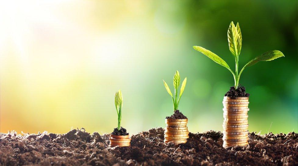 The_corporate_money_plant